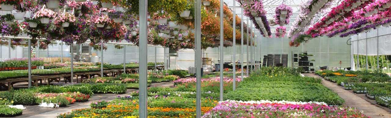 Jardinerie bergon nature jardin for Jardinerie des jardins