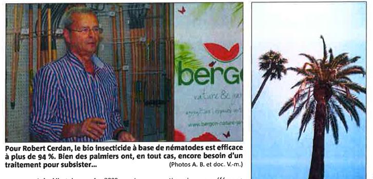 Ravageurs de palmiers : prôner la solution bio