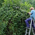 Quand doit-on contacter un paysagiste ?