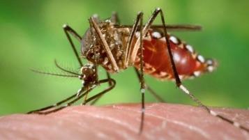 ZIKA : l'explosion d'un virus émergent