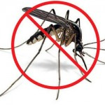 Le larvicide biologique contre les larves de moustiques
