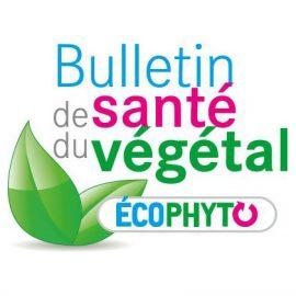 BSV (Bulletin de Santé du Végétal) Arboriculture n°1