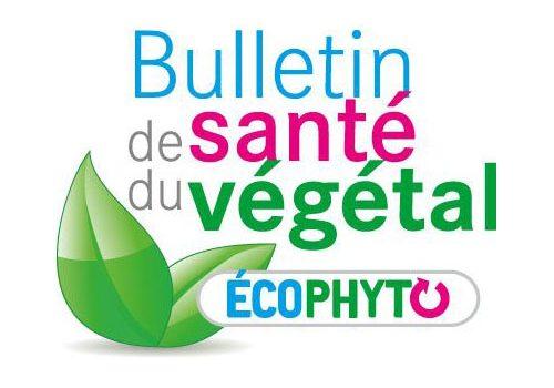 BSV (Bulletin de Santé du Végétal) Arboriculture n°3 Poirier