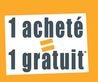 Chrysanthème – 1 acheté = 1 OFFERT !