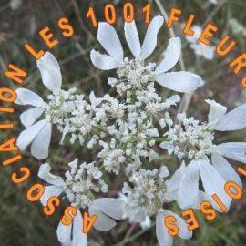 Une association remarquable : Les 1001 fleurs Mottoises