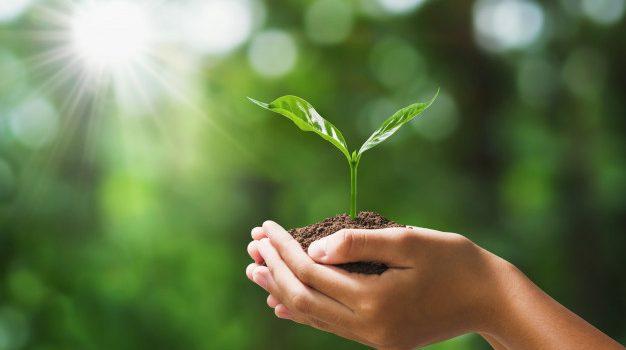 COVID-19 : La vente de plants et semences alimentaires sont de nouveau disponible !