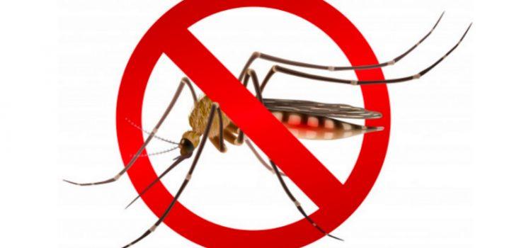 Comment éviter la prolifération du moustique tigre ?