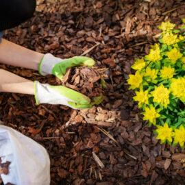 La protection des végétaux contre le froid ❄