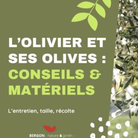L'olivier et ses olives : conseils & matériels 🌿